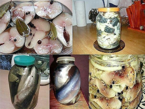 Рецепт засолки скумбрии в домашних условиях в рассоле 637